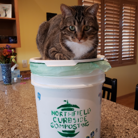 Image of a cat sitting on a Northfield Curbside Compost bucket